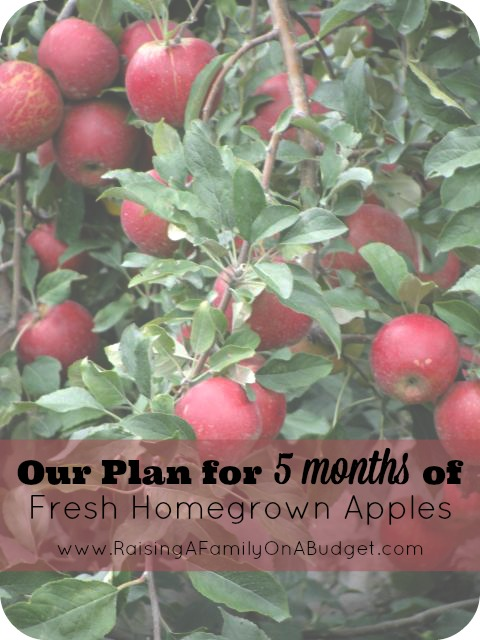 5month of apples